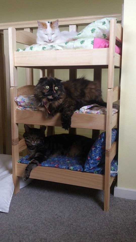 71541401762889786e26f653712adde7 - Would You Let Your Cat Sleep In Your Bed? Reasons Against And Possible Solutions