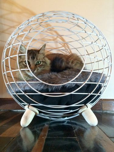 85a6d2b8db68674bfbf0a6511a99a631 - Would You Let Your Cat Sleep In Your Bed? Reasons Against And Possible Solutions